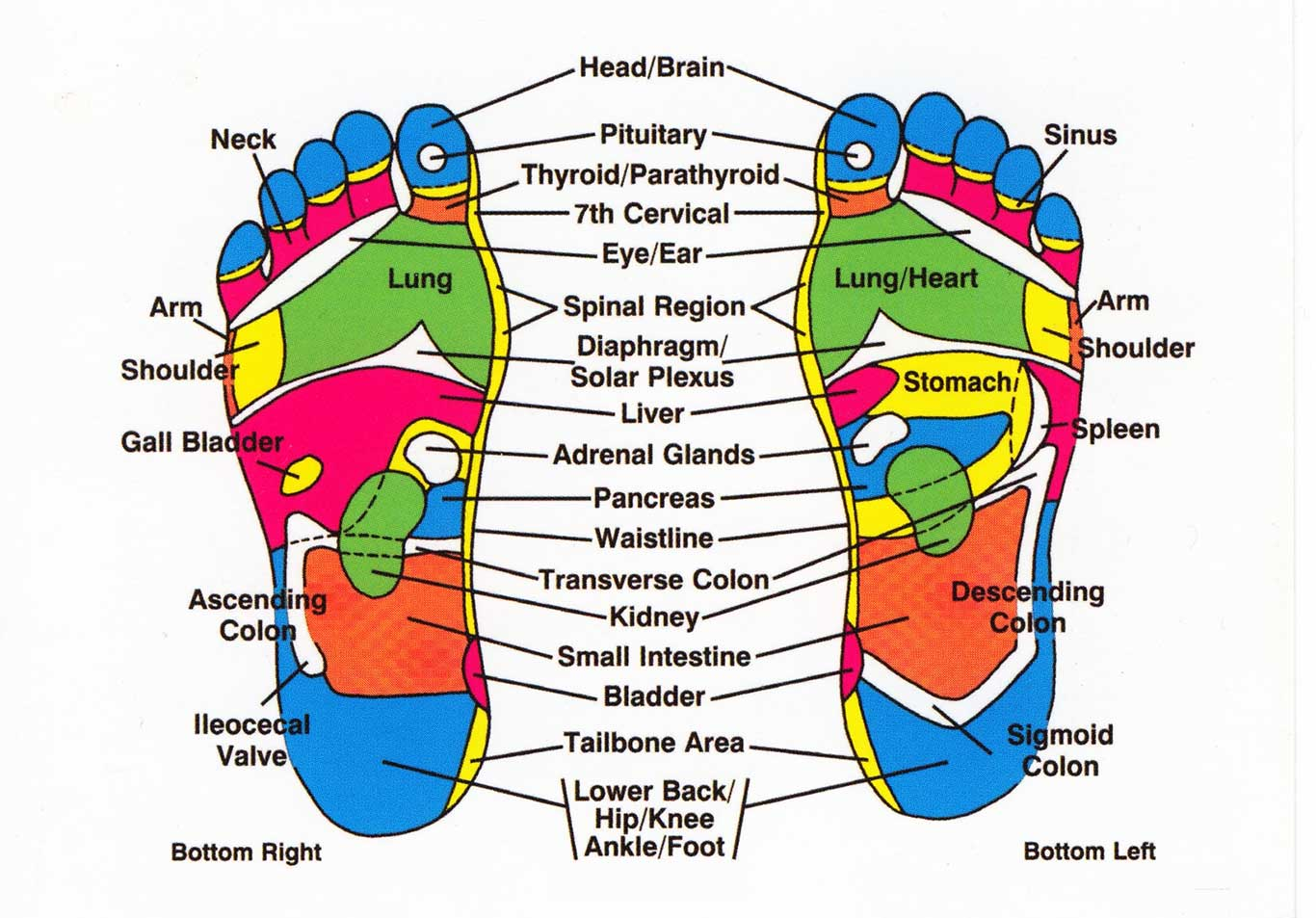 Reflexology And Your Body How Everything Is Connected